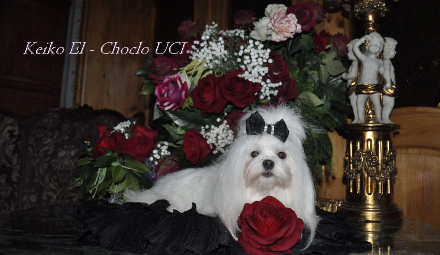 KEIKO EL -CHOCLO UCI