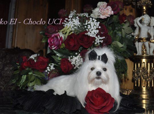 Keiko El - Choclo UCI