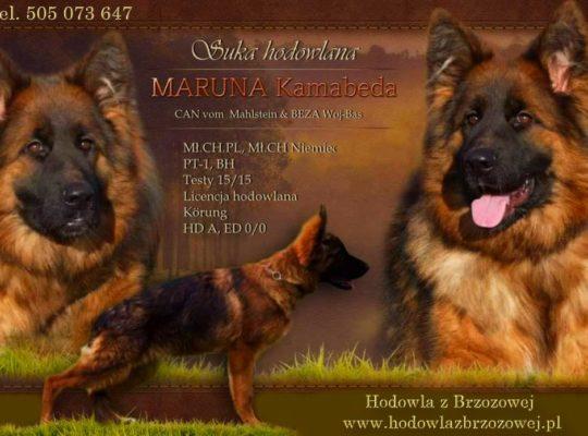 Maruna Kamabeda HD/A, ED O/O
